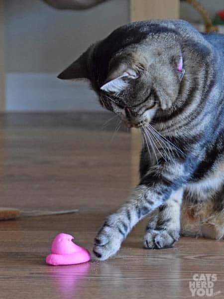 pawing the pink chick