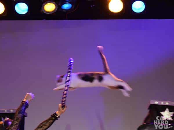 Long_jumping_kitty_wm