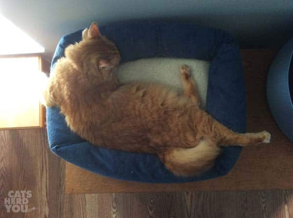 Newton overflows his bed