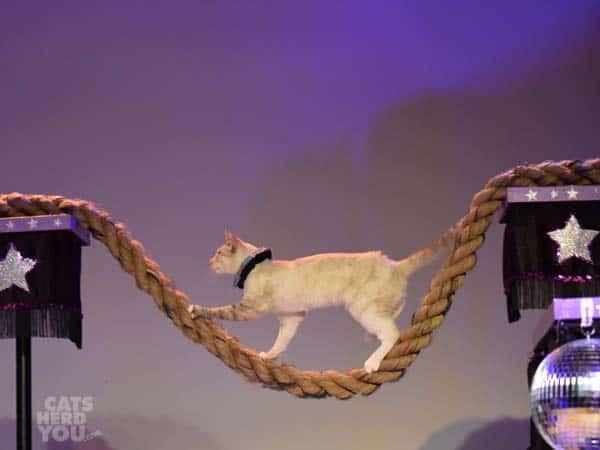 Nola_walks_tightrope_wm