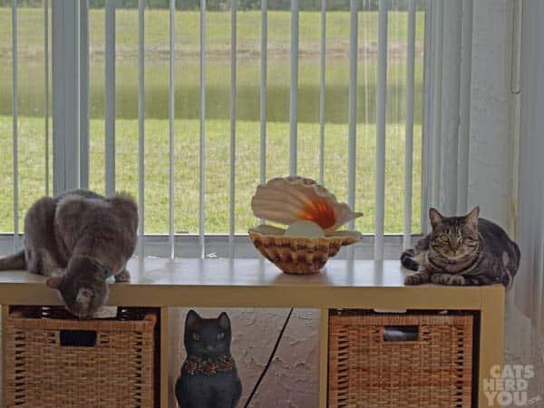 Ashton watches Pierre raid the drawer