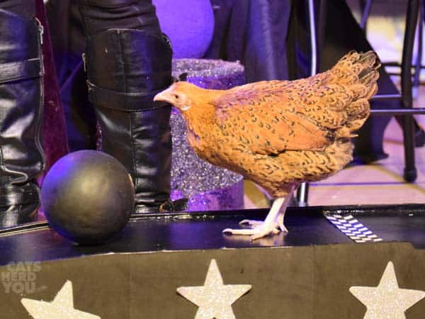 chicken_bowling_02_wm