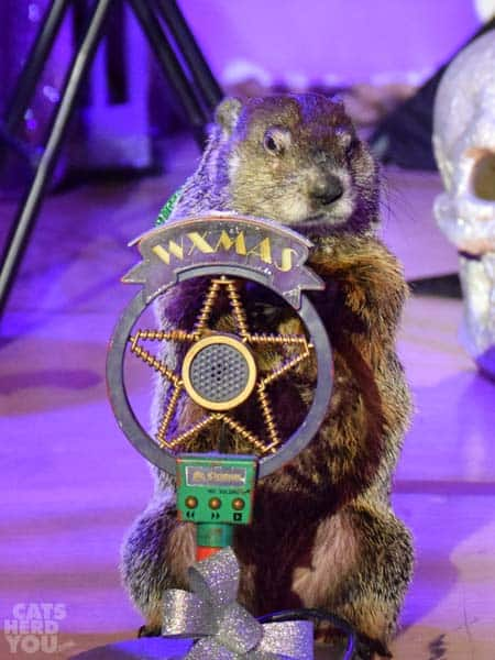 groundhog_microphone_wm