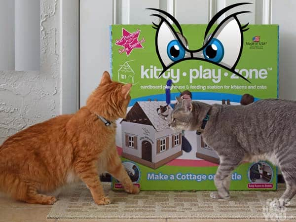 Newton is fearful of KItty Play Zone box