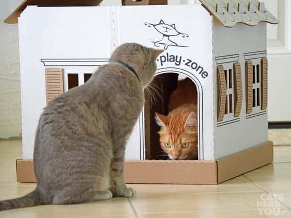 Newton inside Kitty Play Zone