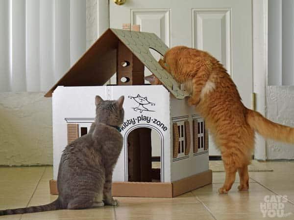 Newton raids Kitty Play Zone