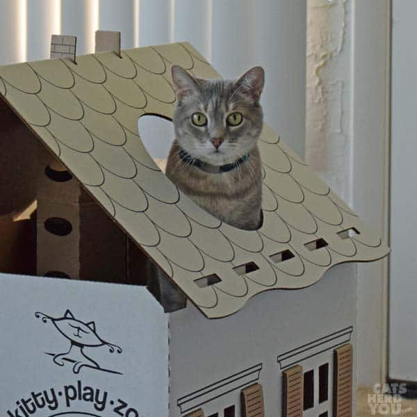 Pierre sticks out of roof of Kitty Play Zone