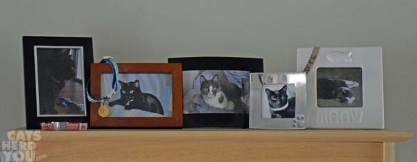 Cat photo shelf