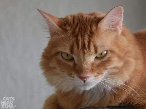 Newton looks serious