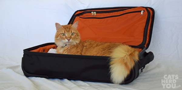Newton lounging in luggage