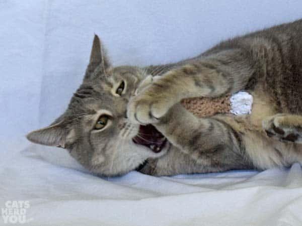Pierre bites knit chicken leg