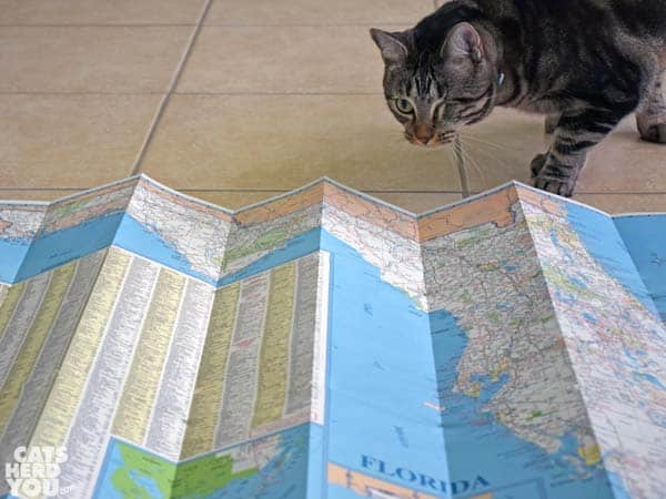Ashton examines the map