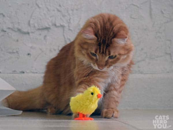 Newton with windup chick