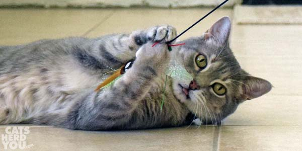 Pierre keeps wand toy