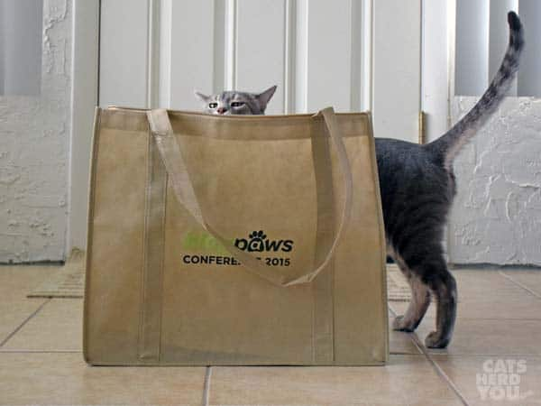 Pierre and the BlogPaws bag
