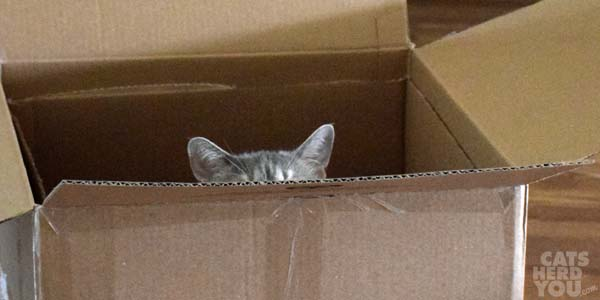 Pierre in box