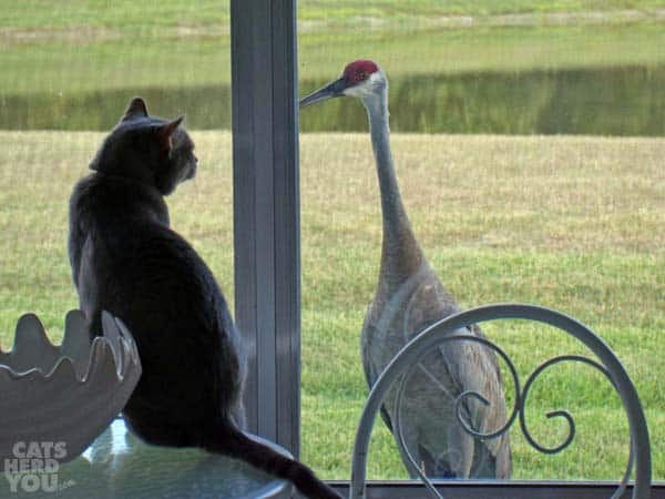 Pierre is eye-to-eye with the sandhill crane