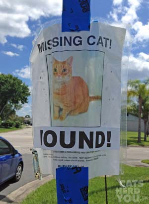 Missing Cat Found sign