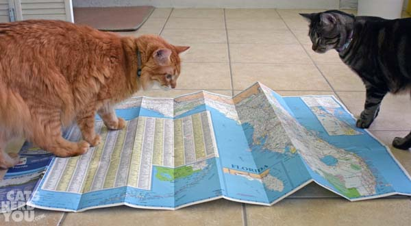 Newton and Ashton read the map