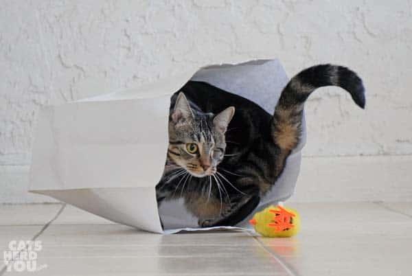 Ashton exits paper bag