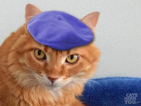orange cat wearing beret