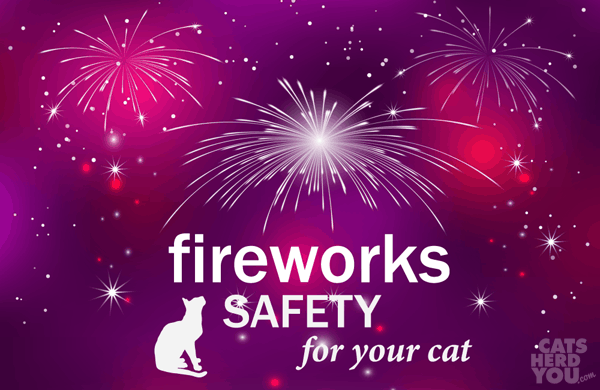 fireworks safety for your cat