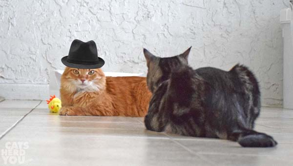Orange tabby cat in fedora and brown tabby with chick