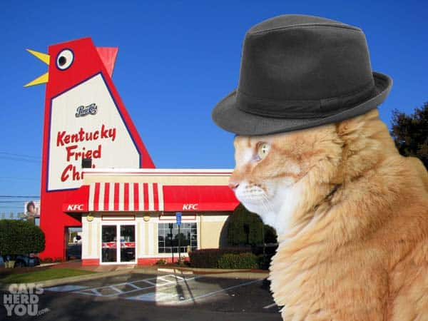 orange tabby cat in fedora at kfc chicken building