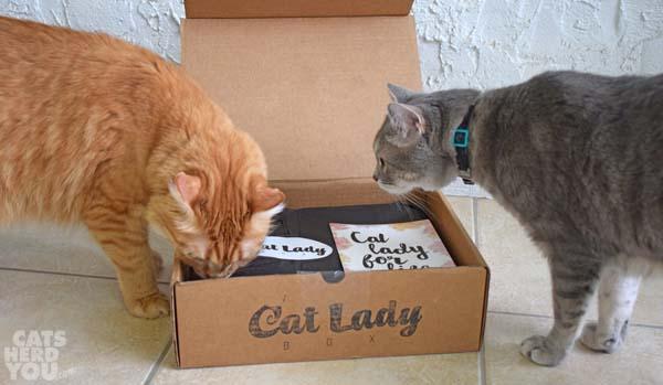 Pierre_Newton_inspect_catladybox_wm