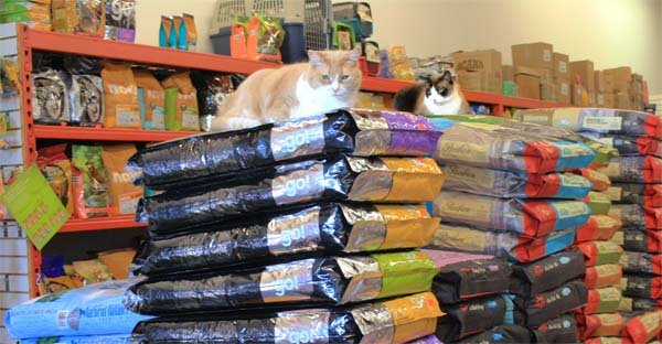 cats_sitting_on_bagged_food