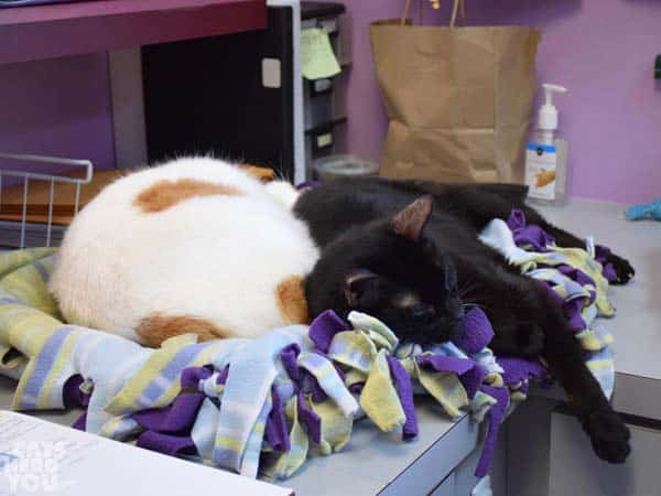two cats adoptable from Good Mews Animal Foundation in Atlanta, GA (Marietta)