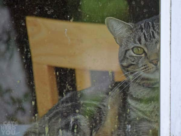 brown tabby cat looks out dirty window