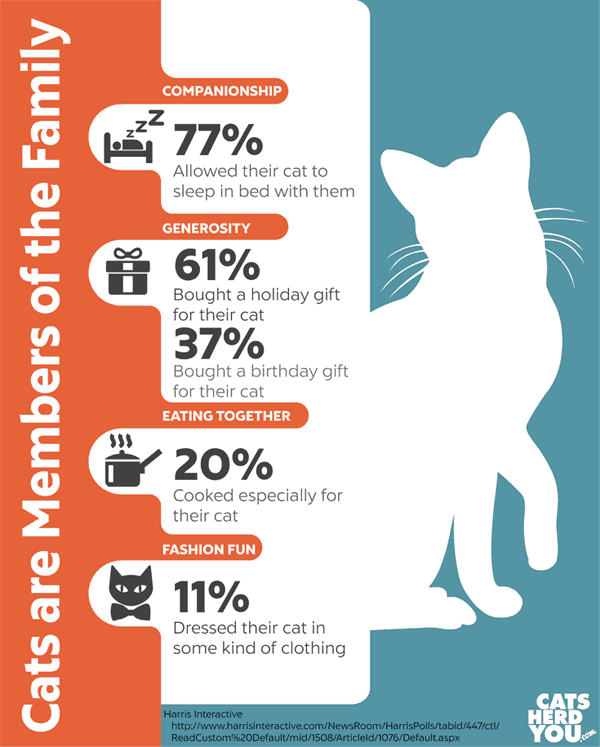 Cats are Members of the Family Infographic