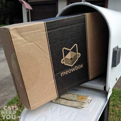 Meowbox arrives in mailbox