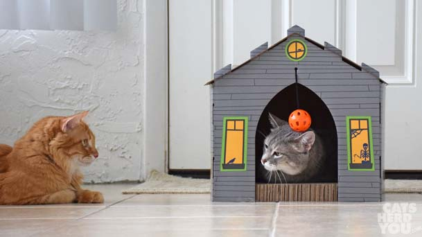 Gray tabby cat looks out of haunted house at orange tabby cat