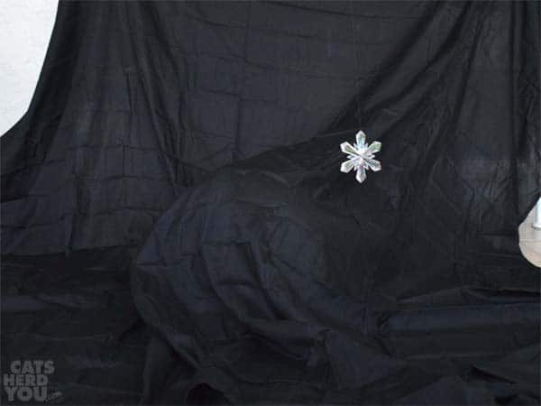 cat hides under sheet from snowflake