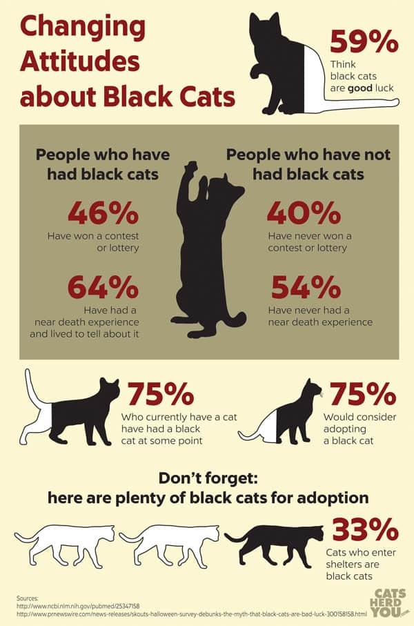 Changing Attitudes Toward Black Cats Infographic