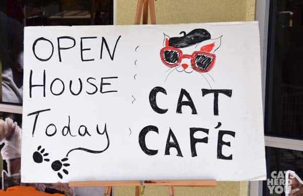 cat cafe open house sign