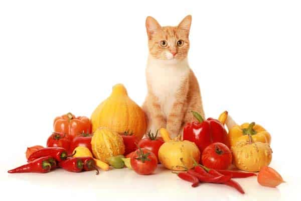 orange tabby cat with fresh vegetables