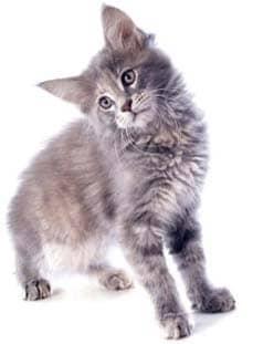 cat tilts head sideways