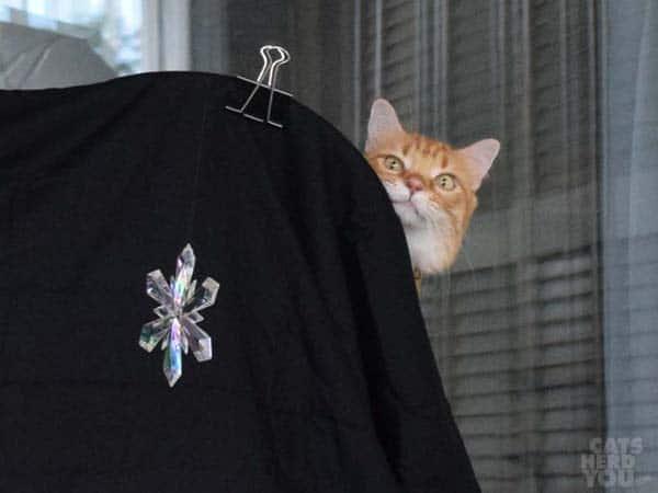 orange tabby cat peers around background for snowflake