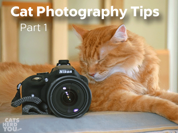 cat photography tips part 1