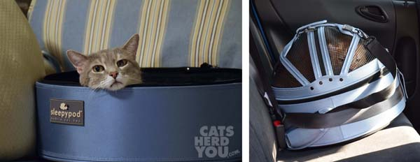 Sleepypod convertible cat bed and carrier with gray tabby cat