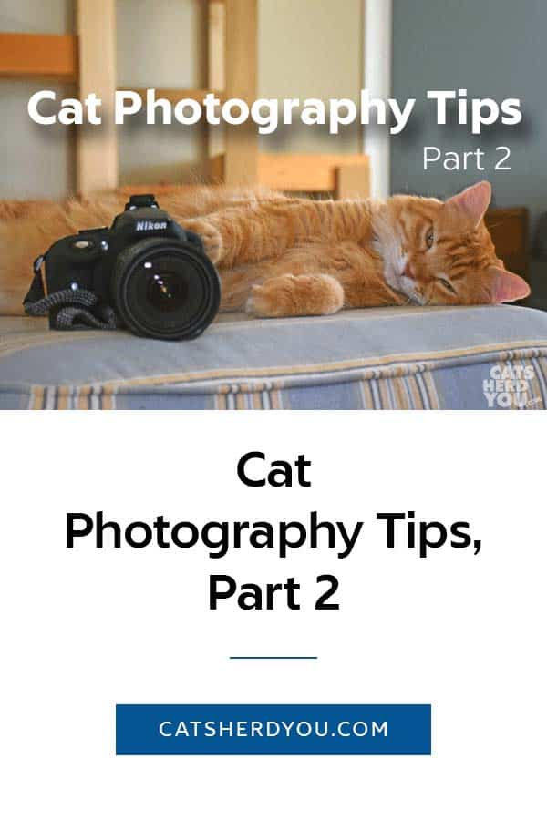 Cat Photography Tips, Part 2 -- Simple, practical tips to help you take better photos of your cat. #cat #photography