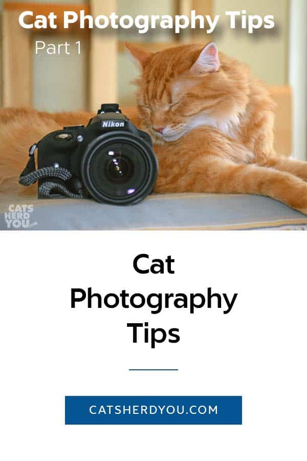 Cat Photography Tips: Lighting. Many of us don't have ideal lighting in our homes, but we can make the most of what we have for better photos of our cats. #cats #photography