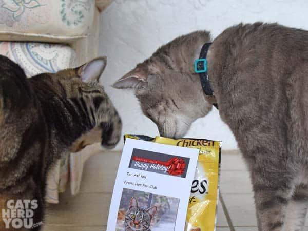 brown tabby cat swats gray tabby cat