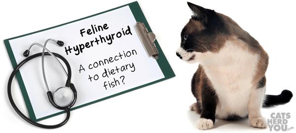 Feline hyperthyroidism: a link to dietary fish?