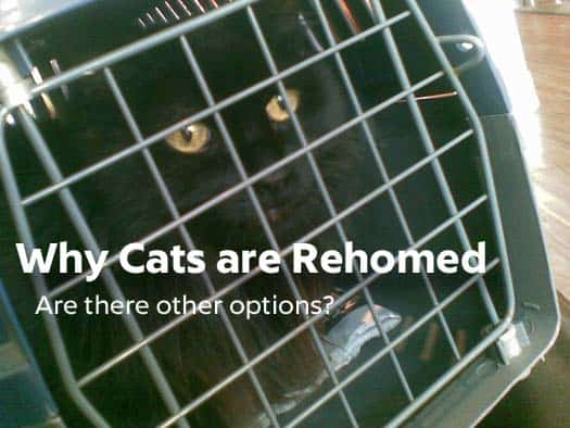 why cats are rehomed