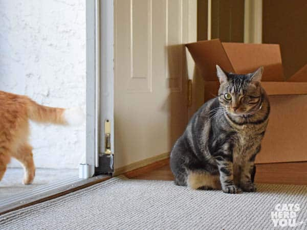 one-eyed brown tabby cat sits by open doorway