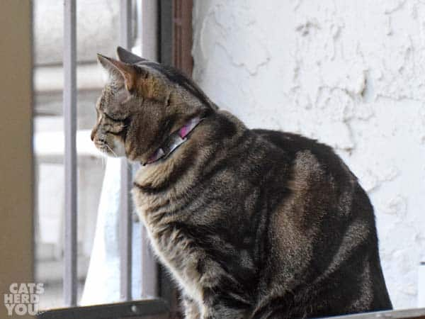 Brown tabby cat on porch